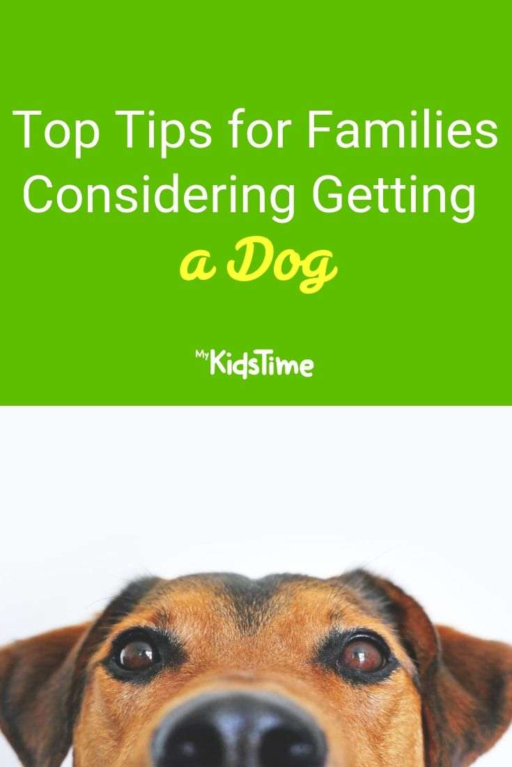 Top Tips for Families Considering Getting a Dog