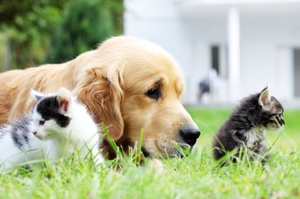 dogs-with-cat