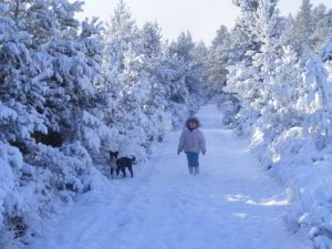sensory christmas dog walking