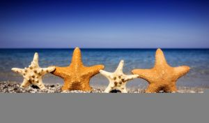 Happy starfishes