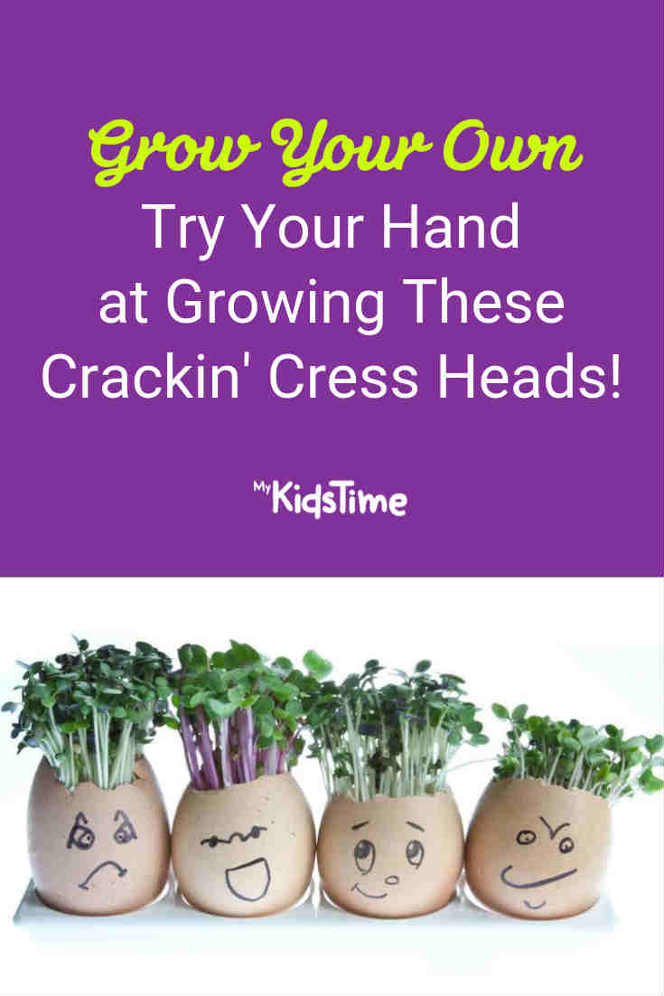 Try Your Hand at Growing These Crackin' Cress Heads - Mykidstime