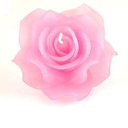 light-pink-rose-large2