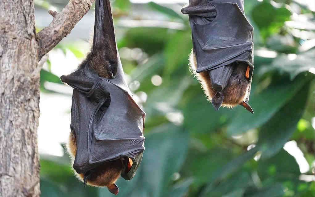 bats and echolocation - learning about sound