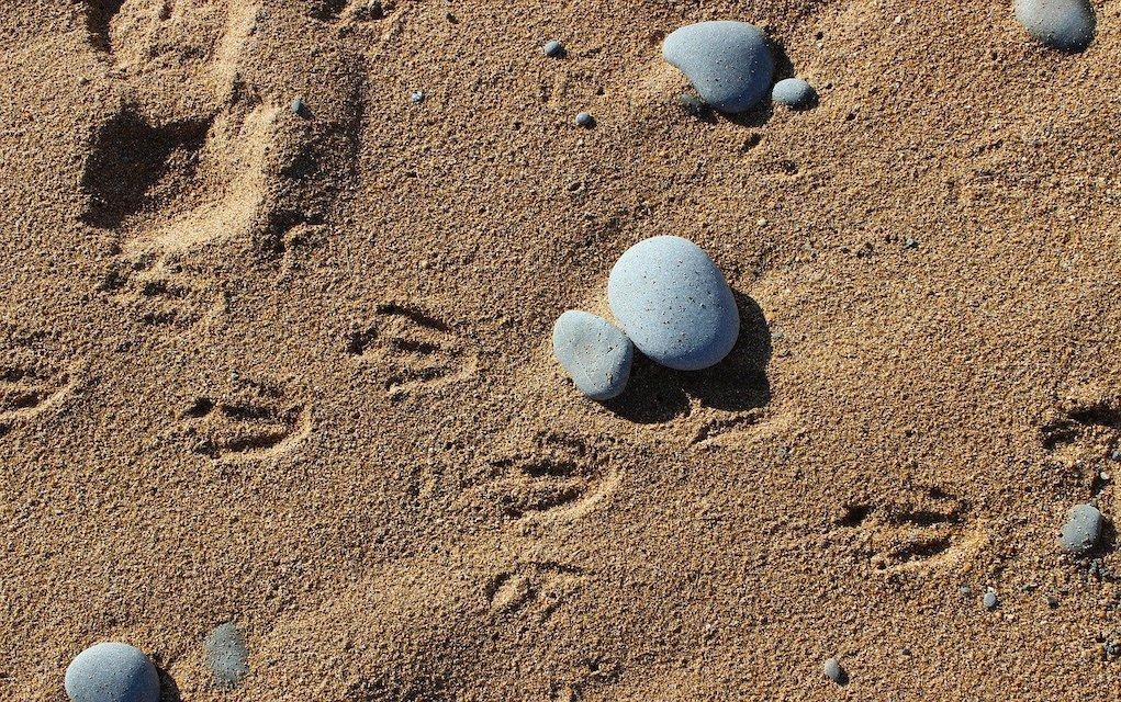 Animal tracks paw prints outdoor activities for kids