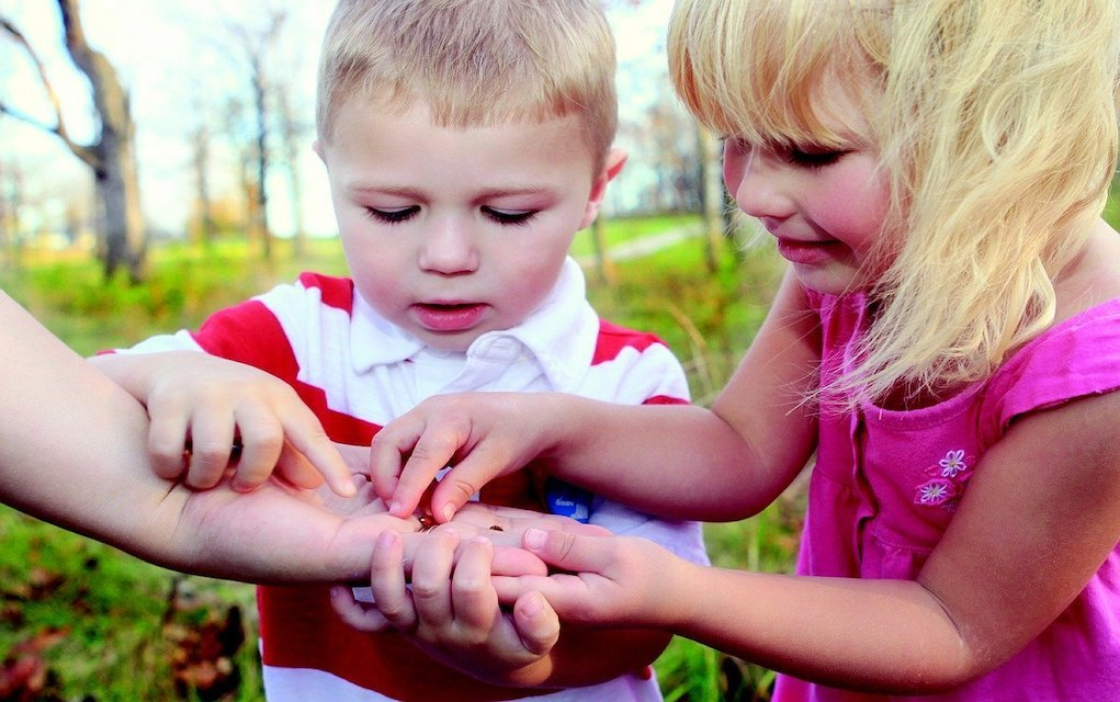 children bug hunt outdoor activities for kids
