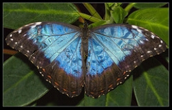 Butterfly_photopin