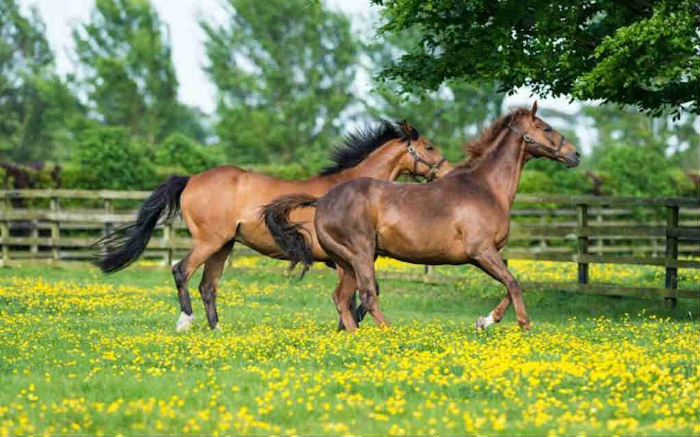 Irish National Stud for things to do in Leinster - Mykidstime