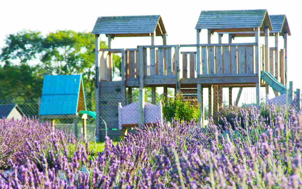 Wexford Lavender Farm for things to do in Leinster - Mykidstime