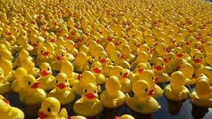 free things to do in Ireland duck race carlow