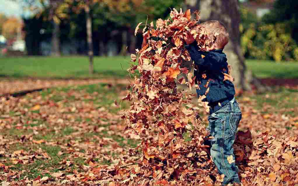 boy in autumn leaves (1)