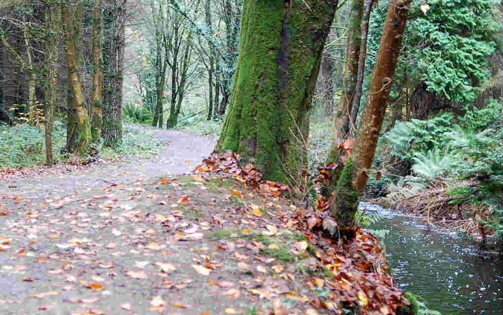 Derrycassin Woods Longford - Mykidstime family walks