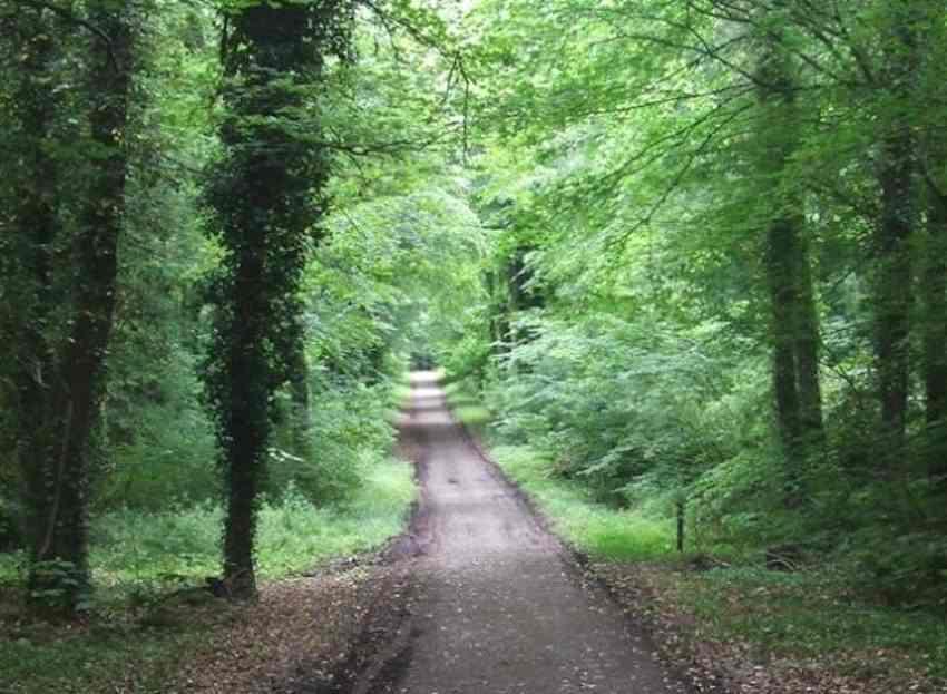 Donadea-Forest