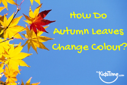 How Do Autumn Leaves Change Colour-