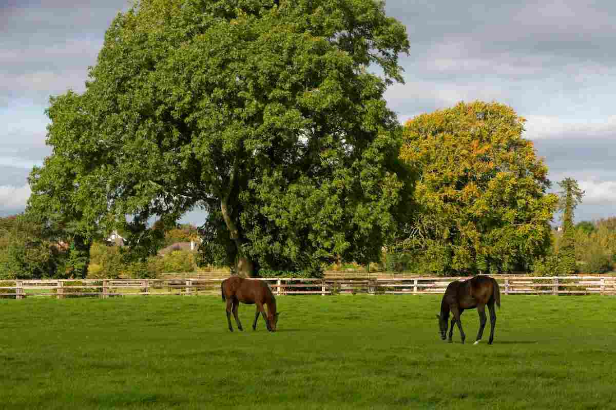 National Stud and Gardens - ICP (1)