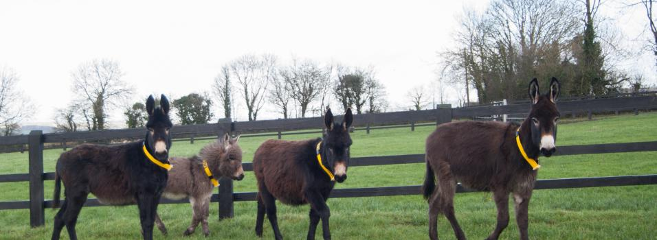 donkey sanctuary cork