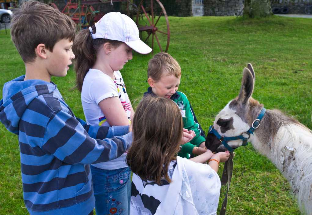 tullyboy farm family things to do in Ireland at Easter
