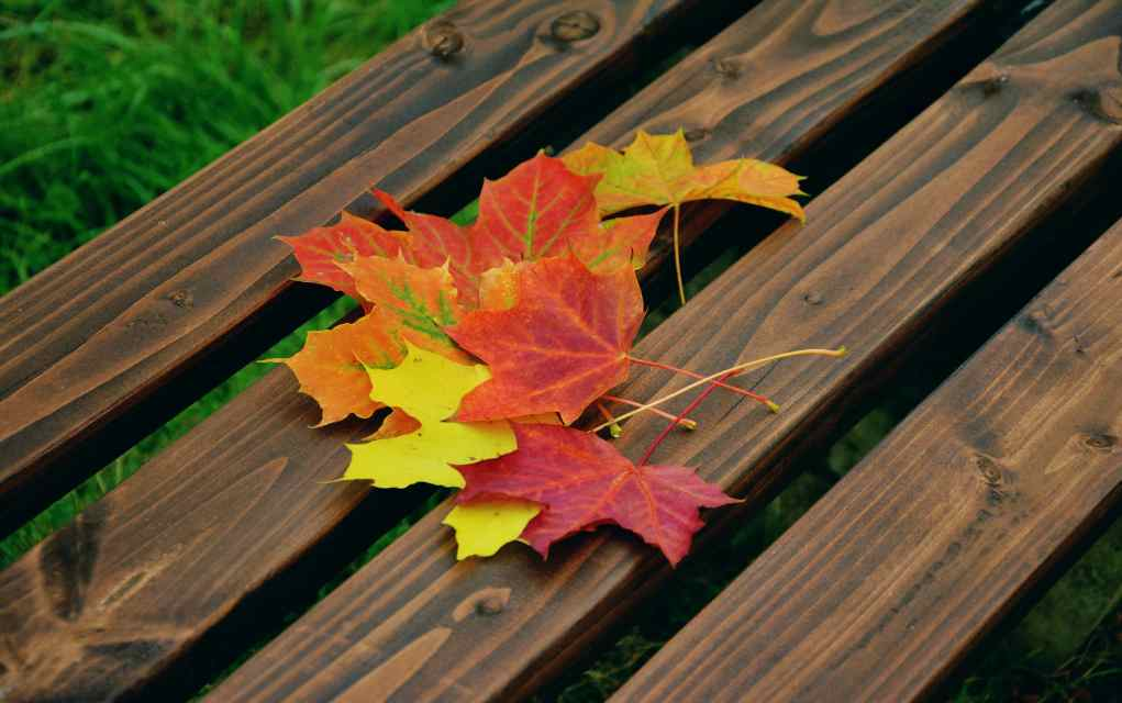 autumn scavenger hunt with kids