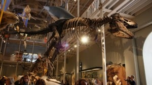 National-Museum free things to do in edinburgh with kids