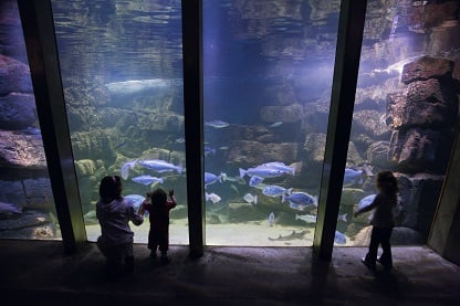 Galway Atlantaquaria best places to see animals in Ireland