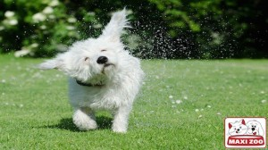 Dog Shakes Water Off
