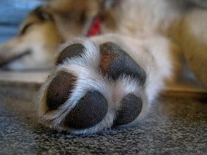 Dogs paw