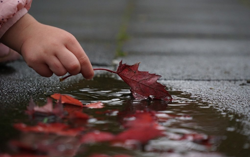 Rainy day leaves in puddle