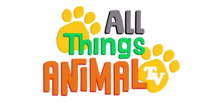 All_Things_Animal_TV
