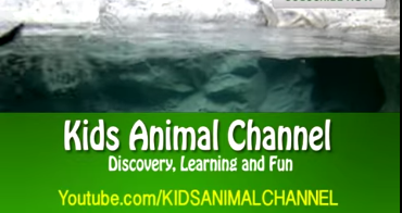 Kids_Animal_Channel