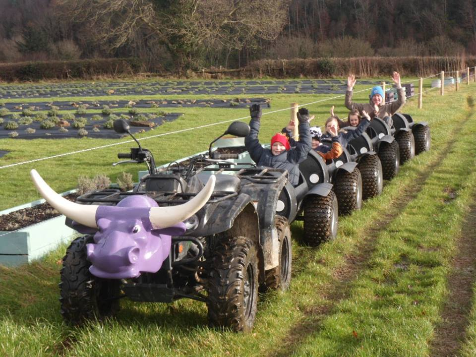 Wexford Lavender farm places to take your child this summer