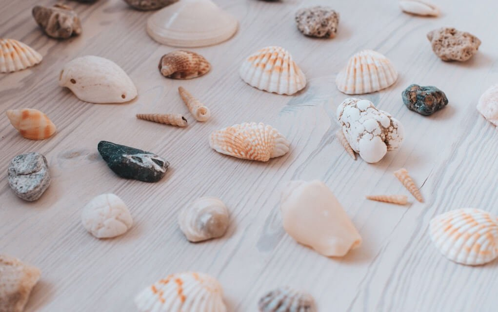 selection of shells for beach craft ideas