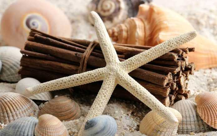 Shells and starfish for beach craft ideas
