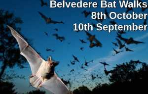Belvedere House Bat Walks