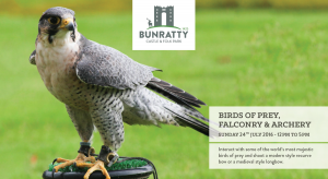 birds of prey event bunratty castle