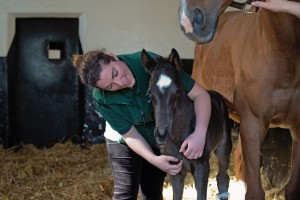 Staff with Foal