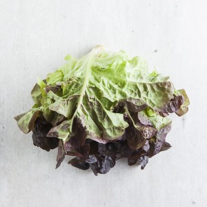 nutrition facts about lettuce
