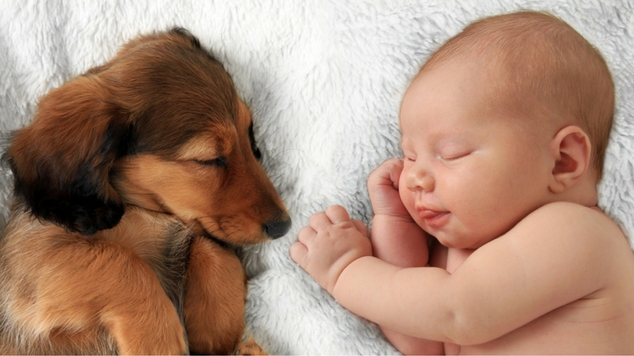 tips-on-getting-pets-ready-for-new-baby