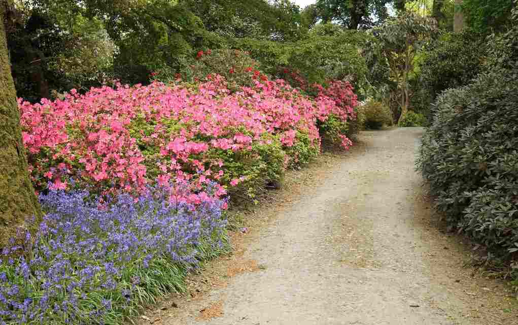 Mount Congreve Gardens Waterford