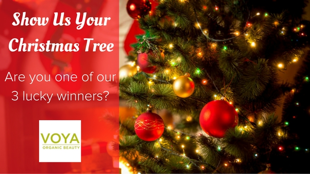 show-us-your-christmas-tree-winners-featured