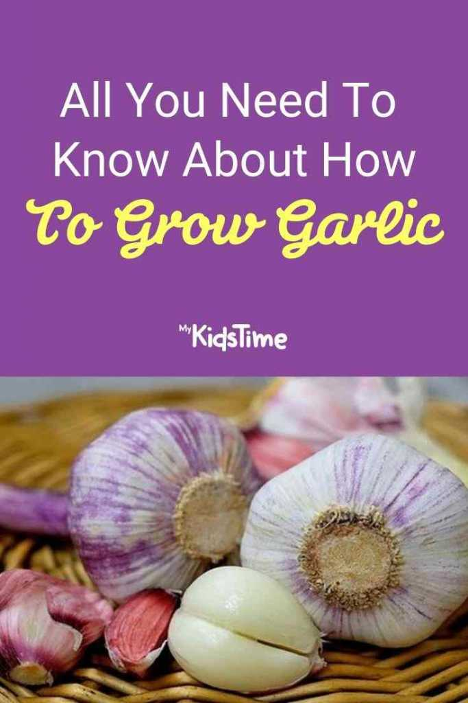 All You Need To Know About How To Grow Garlic
