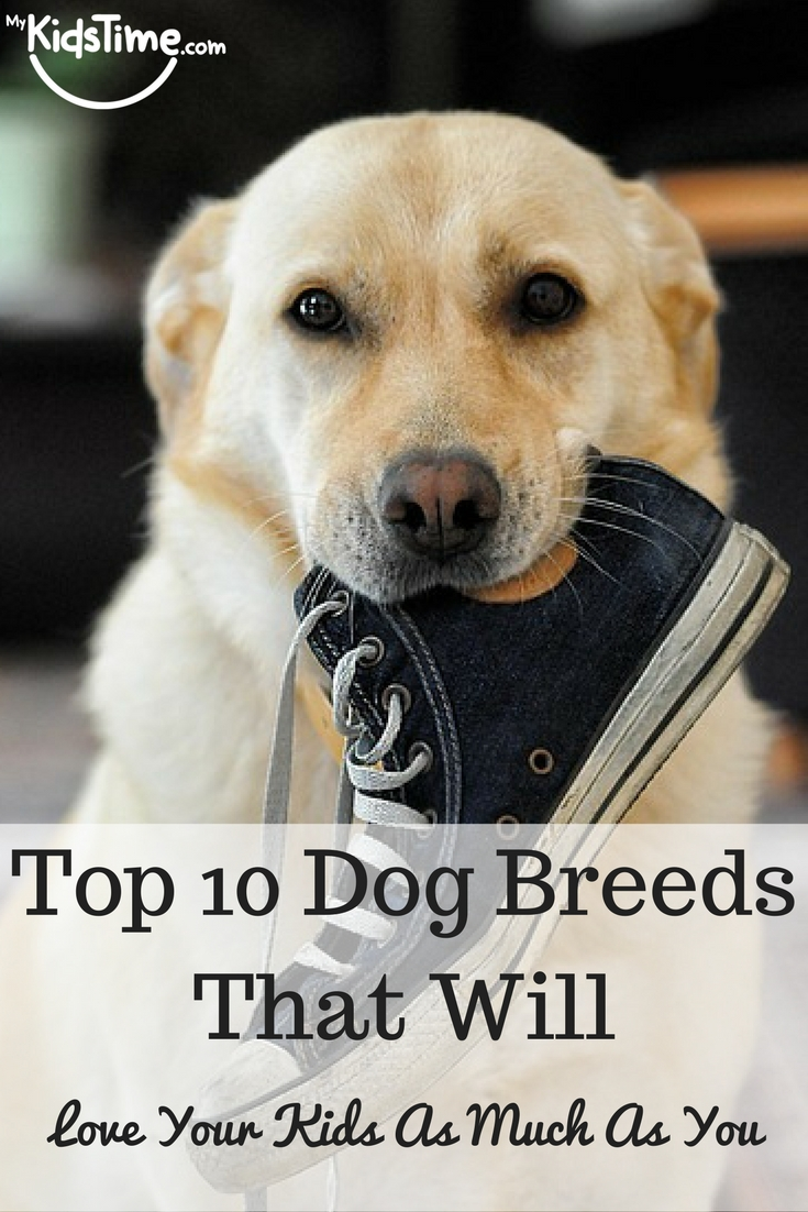 Top 10 dog breeds that will love your kids as much as you for Best dog breed for you