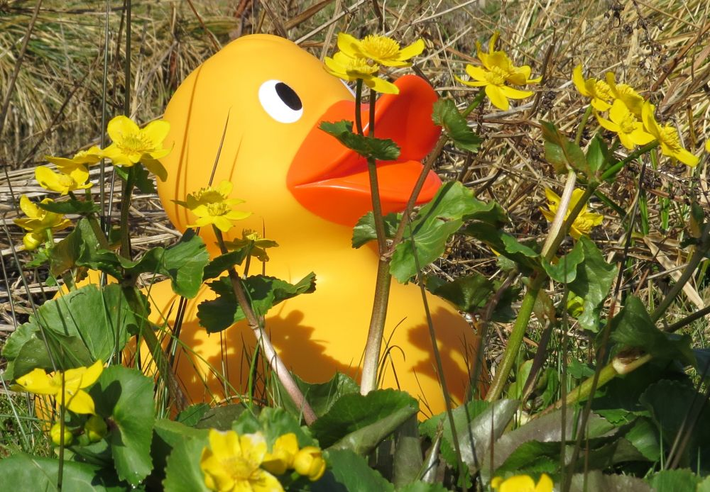Easter GIANT duck hunt Easter events for kids and families in the UK