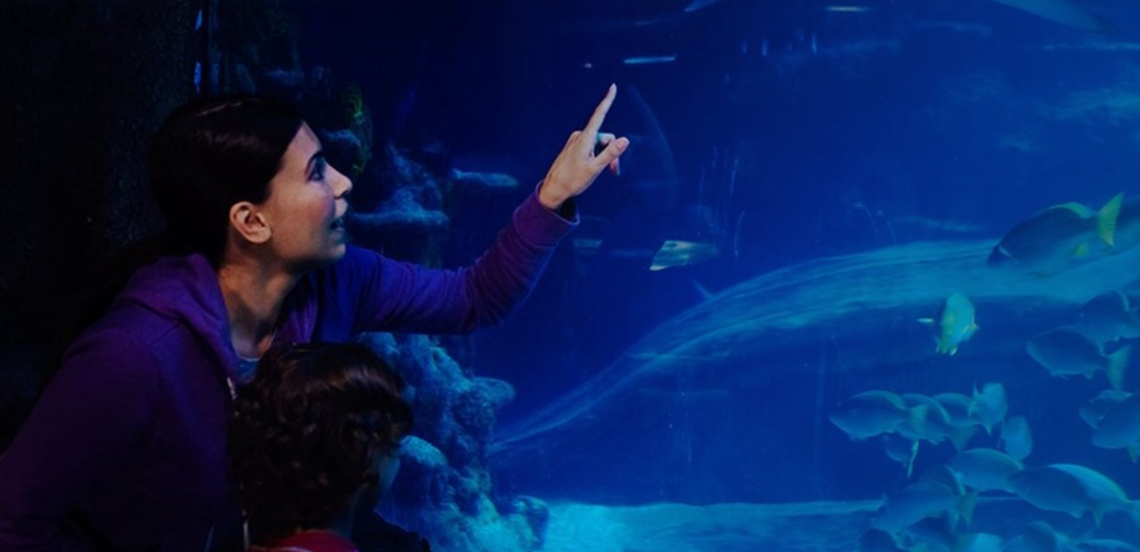 Places to take kids london sealife aquarium
