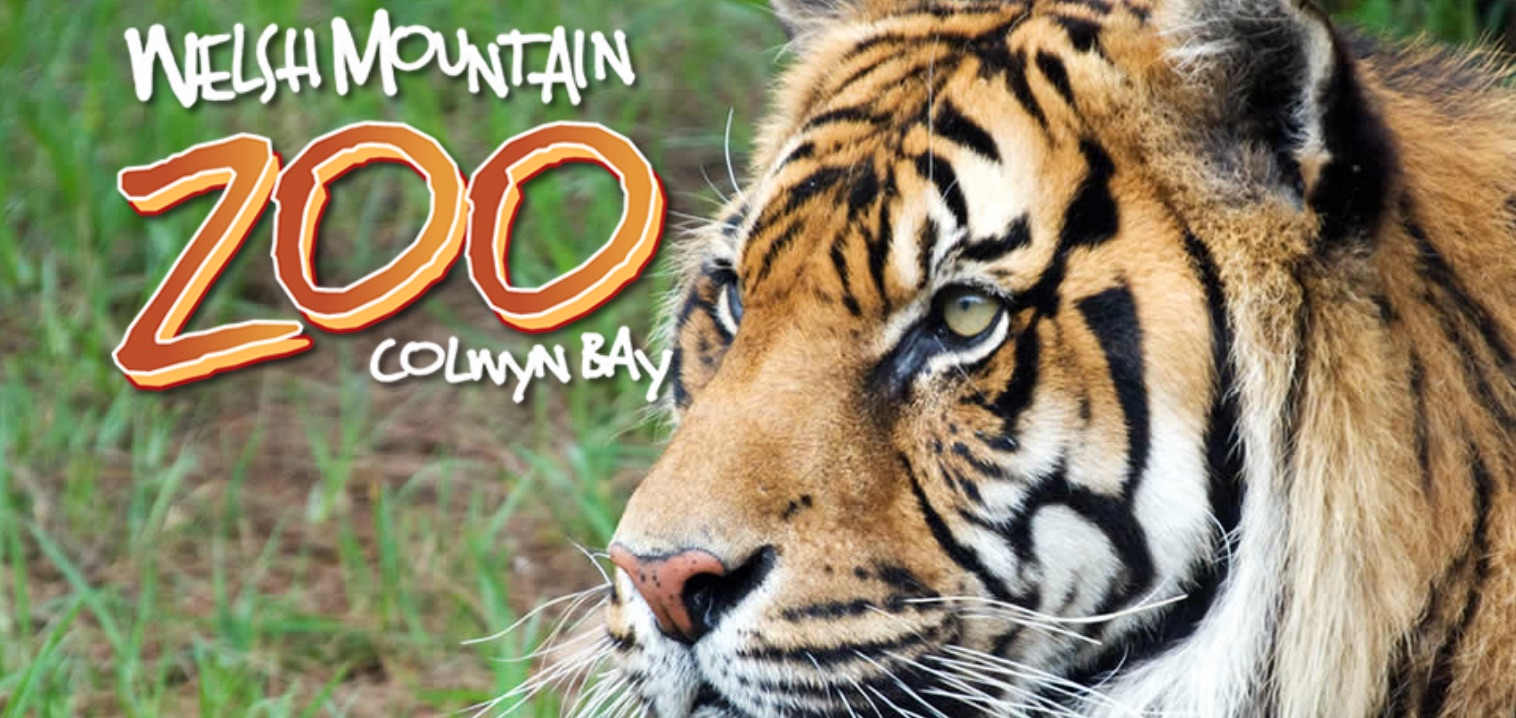 places to take kids welsh mountain zoo colwyn bay