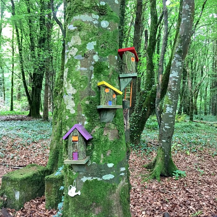 Belleek Woods Fairy Trail Ballina Co. Mayo family walks in Mayo