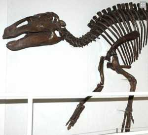 places to see dinosaurs in Ireland Ulster Museum Exhibition