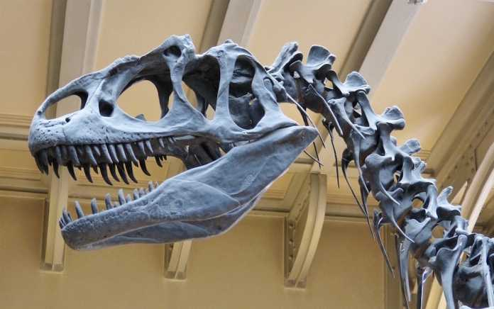 places to see dinosaurs in Ireland