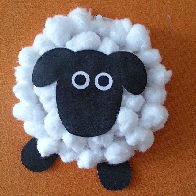 sheep cotton wool