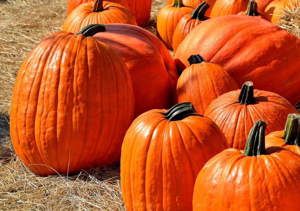 pumpkin picking Events in Ireland at Halloween