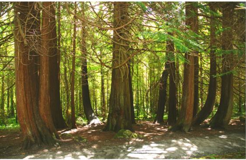 coole park walks for families in Ireland