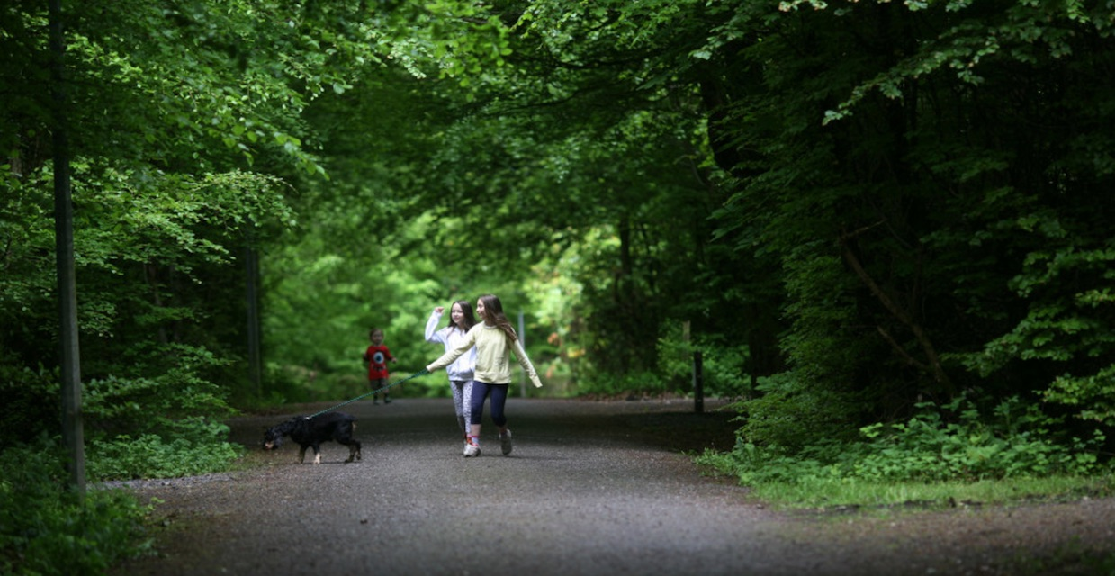 walks for families in Ireland lough key forest park walking